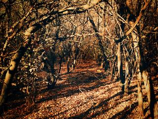 corridor of dense thickets