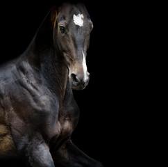 akhal-teke horse portrait closeup in low key