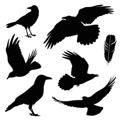 crow illustration set