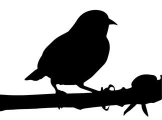 Silhueta de um pássaro sobre um galho de árvore