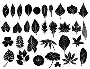 silhouette leaves set