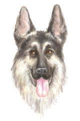 German shepherd. Image of a big thoroughbred dog. Watercolor painting.