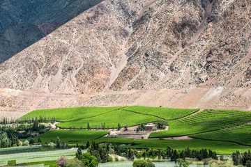 Vineyards of Elqui Valley, Andes part of Atacama Desert