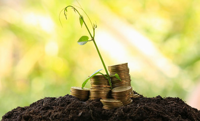 money coins,Business investment growth concept,saving concept
