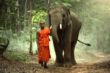 The monk with elephant