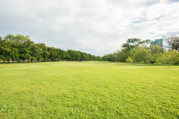 Foto op Plexiglas Pistache Green grass field in park at city center
