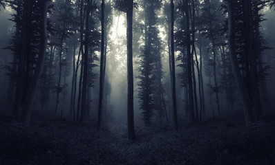 scary night forest scene