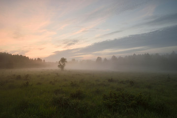 Forest meadow at summer sunset. Fog in the meadow. Mist in the meadow. Sun glow in the meadow. Summer nature.