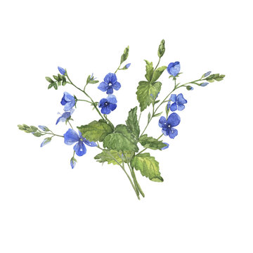 Blue flowers bouquet. Greeting card. Invitation. Forget me not blooming. Hand drawn watercolor illustration.