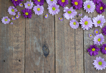 Purple and lilac daisies on wood floor background
