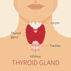 Thyroid gland and trachea scheme shown on a silhouette of a man. Human body organs thyroid anatomy icon. Medical concept. Anatomy of people.