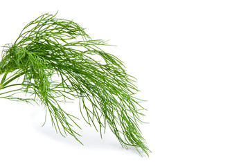 Fresh green fennel isolated on a white