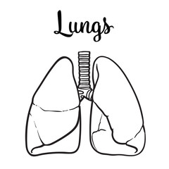 Sketch the lungs, vector sketch hand-drawn illustration isolated on white background, realistic sketch human red beautiful healthy lungs, the lungs of a healthy person clean