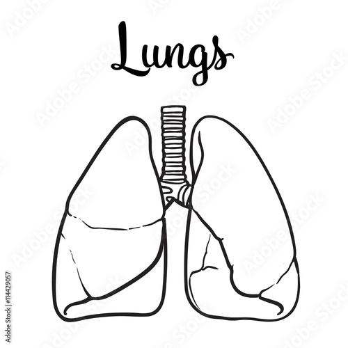 """Sketch the lungs vector sketch hand drawn illustration"