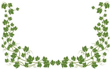 frame with vine leaves