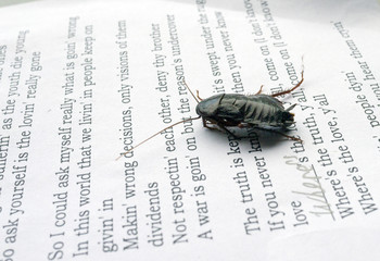 Big black cockroach on the sheet of paper