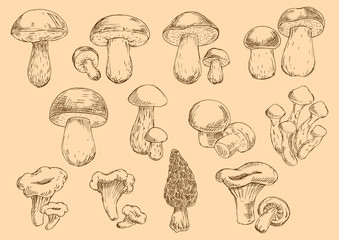 Fresh edible mushrooms engraving sketch symbols