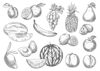 Enjoyable flavorful fresh fruits sketch icons