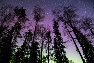 Silhouette of trees against night sky, Finland