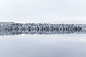 Forest in snow by lake, Finland