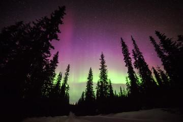 Silhouette of trees with Aurora borealis, Finland