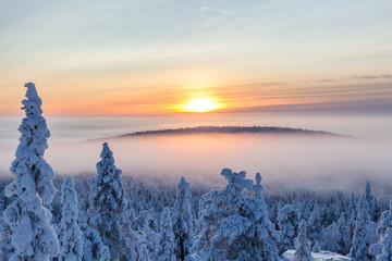 Snow covered trees in sunlight, Finland