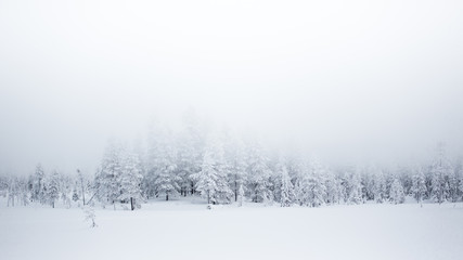 Forest covered in snow and mist, Finland