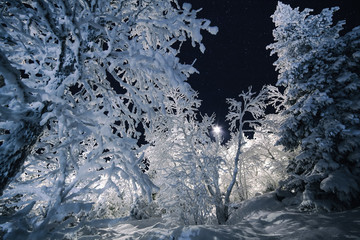 Winter landscape by night