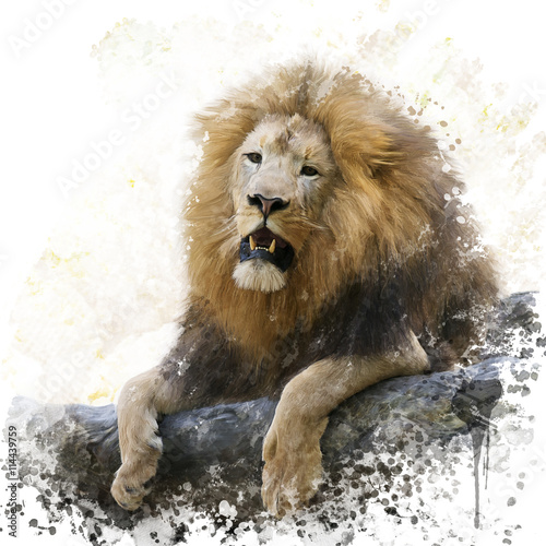 Lion on a Rock watercolor
