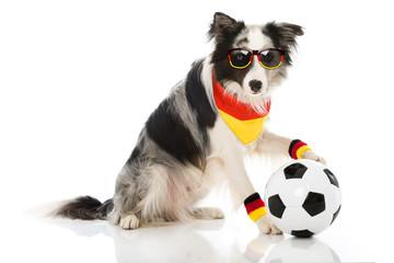 Hund als Fußballfan