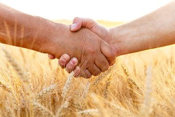 Farmers handshake over the wheat corp, close up.