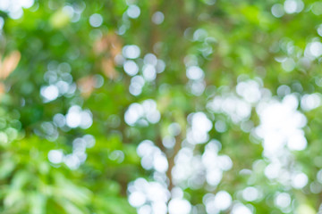 abstract green nature background,