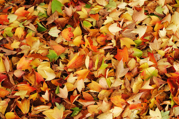 fallen leaves background in autumn