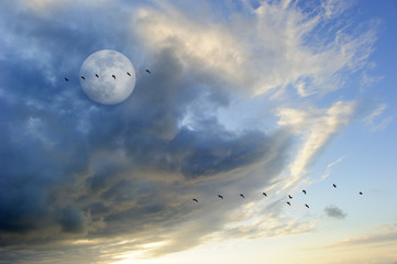 Birds Silhouettes Moon