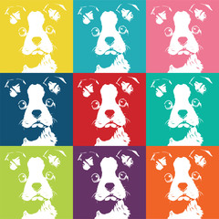 Boston Terrior Color Pattern