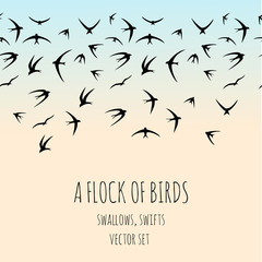 Flock of birds. Swallows, swifts. Hand drawn vector set.