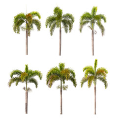 palm trees isolated on white