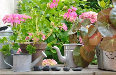 pots de fleurs et arrosoir sur tablette en bois devant hortensia