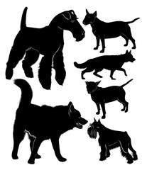 dog collection shepherd dog  bullterrier laika fox terrier. dogs vector black silhouettes isolated on a black background