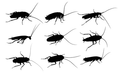 Silhouettes of cockroaches.