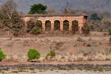 Old Panna fort, river and rivebed at Panna National Park, Madhya Pradesh, India