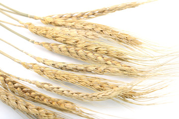 Wheat on the white background.