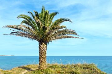 Palm tree on ocean shore.