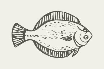 Fish flounder, graphic illustration