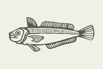 sea fish vector illustration