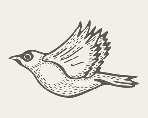 bird flies