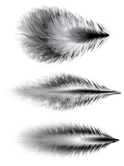 Set of feathers. Vector