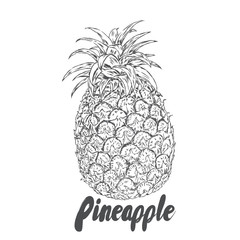 A pineapple. Vector illustration.
