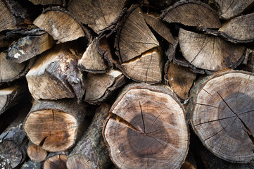 Stacked Firewood Outdoors