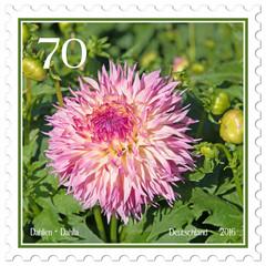 Briefmarke mit Dahlienmotiv